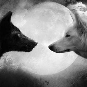 sexual shadow two wolves facing each other in moonlight. a black on and white one